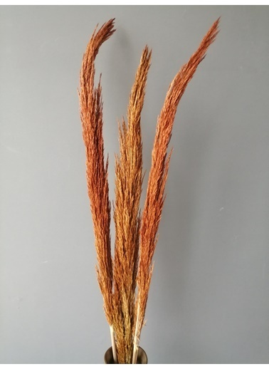 Kuru Çiçek Deposu Gerçek Kuru Çiçek Turuncu İthal Dökülmeyen Şoklanmış Pampas (3 Adet 150 cm) Oranj